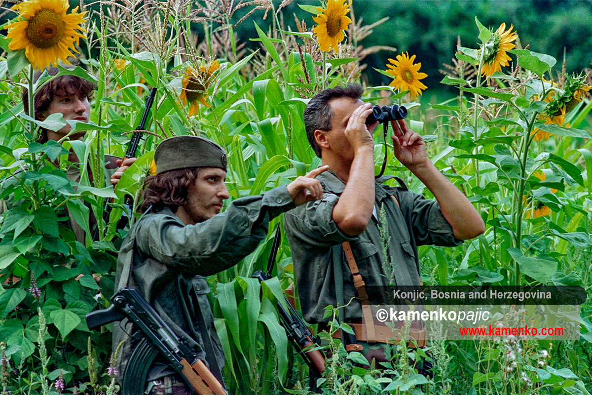 Soldiers monitor enemy position from a field of sunflowers